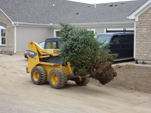 moving tree