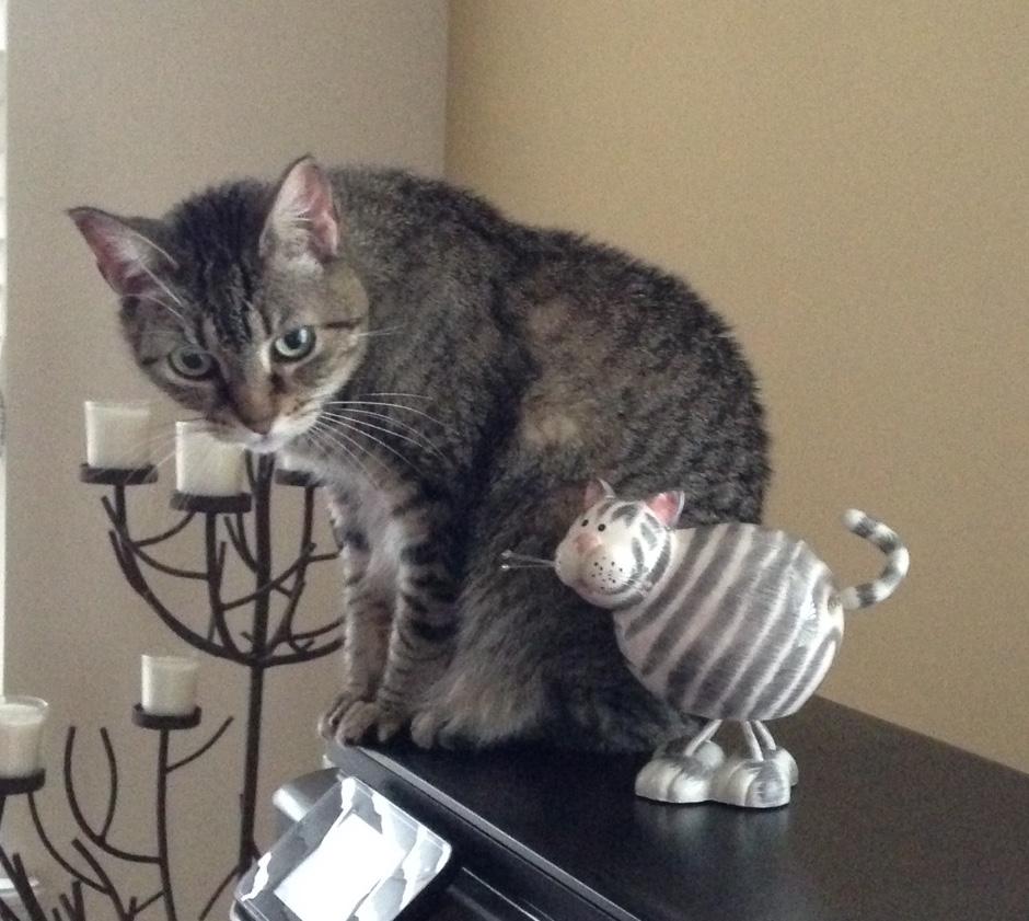 stripedcats