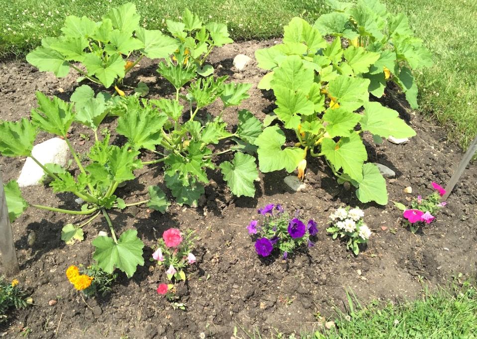 gardencloseup