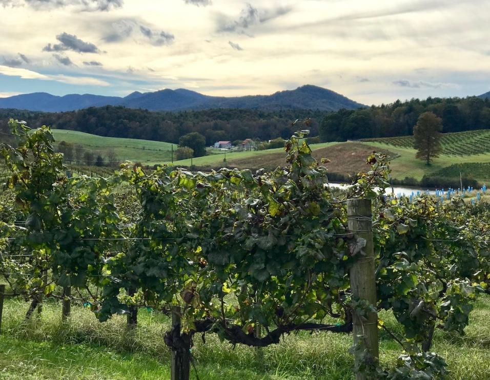 vineyardtour2