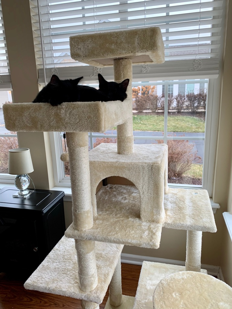 cattree1